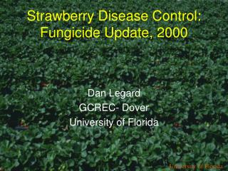 Strawberry Disease Control: Fungicide Update, 2000