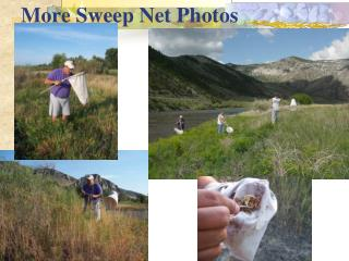 More Sweep Net Photos
