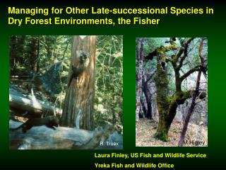 Managing for Other Late-successional Species in Dry Forest Environments, the Fisher