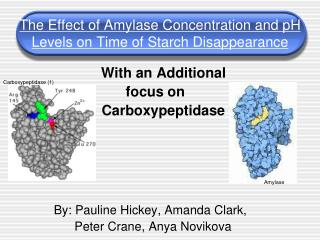 The Effect of Amylase Concentration and pH Levels on Time of Starch Disappearance