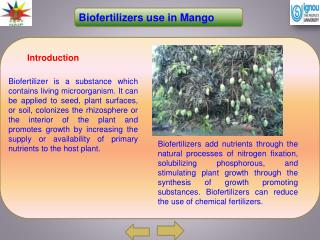Biofertilizers  use in Mango