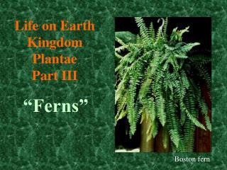 Life on Earth Kingdom  Plantae Part III