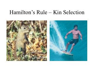 Hamilton's Rule – Kin Selection