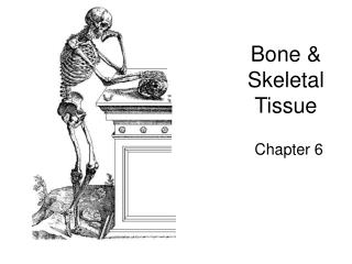 Bone & Skeletal Tissue