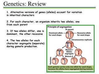 1. Alternative versions of genes (alleles) account for variation in inherited characters