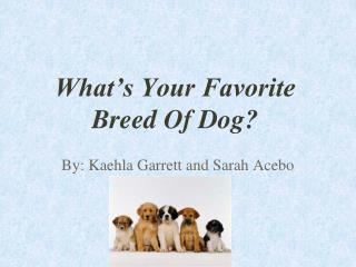 What's Your Favorite Breed Of Dog?