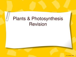 Plants & Photosynthesis Revision
