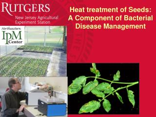Heat treatment of Seeds: A Component of Bacterial Disease Management