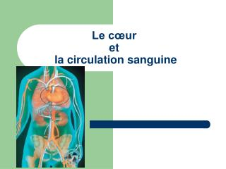 Le c�ur  et  la circulation sanguine