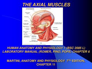 THE AXIAL MUSCLES        HUMAN ANATOMY AND PHYSIOLOGY 1 BSC 2085 L LABORATORY MANUAL ROMER, PINO, POPE CHAPTER 6  MARTIN