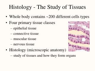 Histology - The Study of Tissues