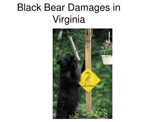 Black Bear Damages in Virginia