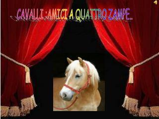 CAVALLI :AMICI A QUATTRO ZAMPE..
