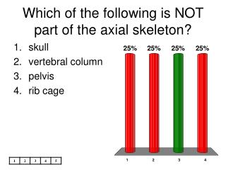 Which of the following is NOT part of the axial skeleton