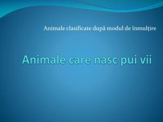 Animale care nasc pui vii