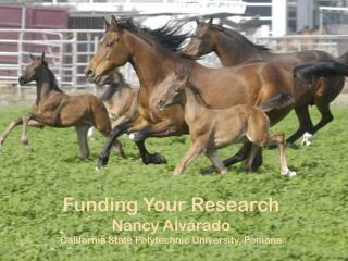 Funding Your Research Nancy Alvarado California State Polytechnic University, Pomona