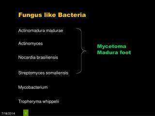 Fungus like Bacteria
