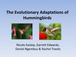 The Evolutionary Adaptations of Hummingbirds