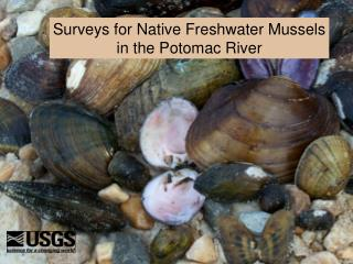 Surveys for Native Freshwater Mussels in the Potomac River
