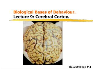 Biological Bases of Behaviour. 			 Lecture 9: Cerebral Cortex.