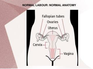 NORMAL LABOUR: NORMAL ANATOMY