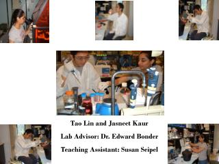 Tao Lin and Jasneet Kaur Lab Advisor: Dr. Edward Bonder Teaching Assistant: Susan Seipel