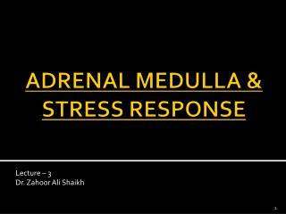ADRENAL MEDULLA & STRESS RESPONSE