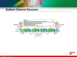 Sodium Channel Structure