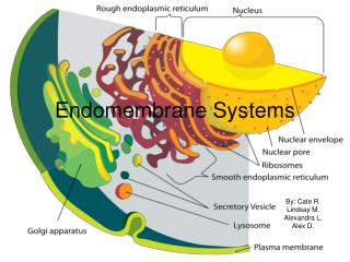 Endomembrane Systems