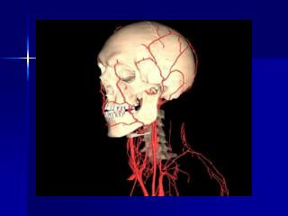 Determinants of Myocardial Performance