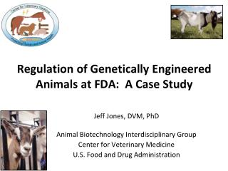 Regulation of Genetically Engineered Animals at FDA:  A Case Study