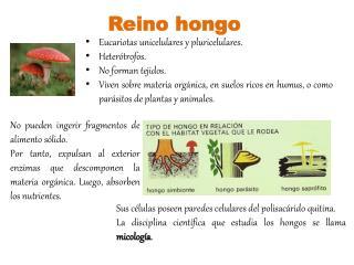 Reino hongo