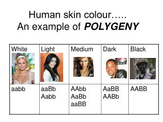 Human skin colour….. An example of  POLYGENY
