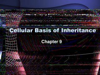 Cellular Basis of Inheritance