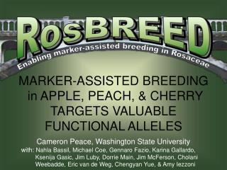 MARKER-ASSISTED BREEDING  in APPLE, PEACH, & CHERRY TARGETS VALUABLE FUNCTIONAL ALLELES
