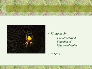 Chapter 5~		 The Structure & 	Function of 		Macromolecules 5.1-5.5