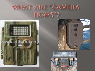 "What are ""camera traps""?"