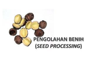 PENGOLAHAN BENIH ( SEED PROCESSING )