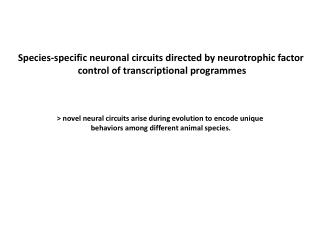 Species-specific neuronal circuits directed by neurotrophic factor