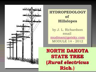 NORTH DAKOTA STATE TREE ( Rural  electricus Rich .)