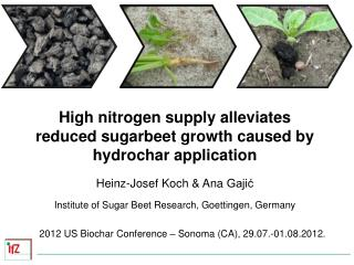 High nitrogen supply alleviates reduced sugarbeet growth caused by hydrochar application