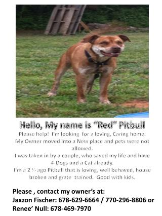 """Hello, My name is """"Red""""  Pitbull Please help!  I'm looking  for a loving, Caring home."""