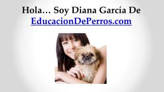 Hola… Soy Diana García De  EducacionDePerros.com