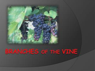 Branches  of the  vine