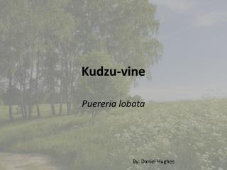 Kudzu-vine