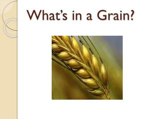 What's in a Grain?