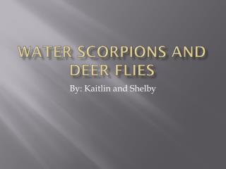 Water Scorpions and Deer Flies