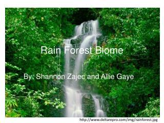 Rain Forest Biome