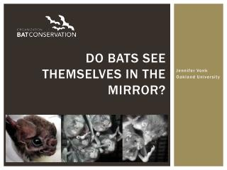 Do bats see themselves in the mirror?