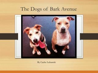 The Dogs of Bark Avenue